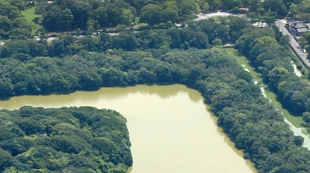立ち退きを求められている朝日寺(写真右上)。隣が仁徳陵古墳の墳丘と濠=堺市堺区